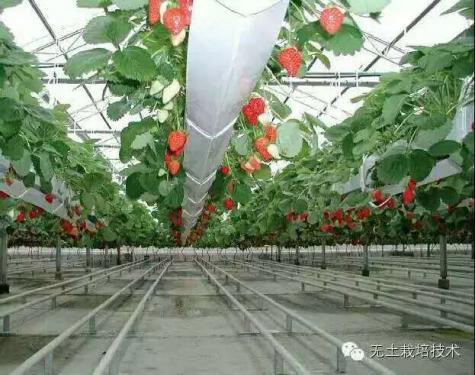 草莓育苗基质
