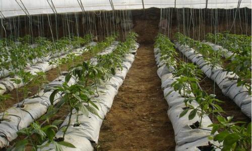 槽式栽培基质